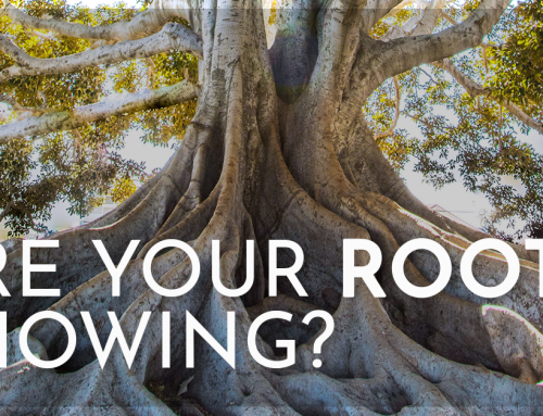 Are Your Roots Showing?