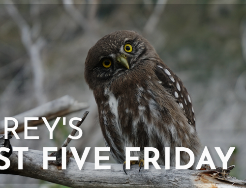 Corey's Fast Five Friday